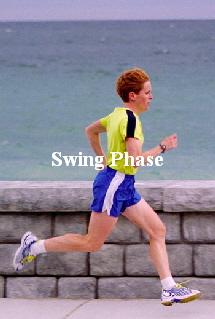 human gait cycle swing
